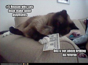 #5 Reason why cats doan make good playmates