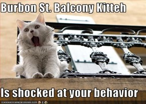 Burbon St. Balcony Kitteh  Is shocked at your behavior