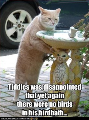 Tiddles was disappointed  that yet again  there were no birds  in his birdbath...