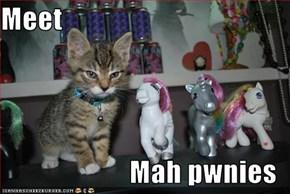 Meet  Mah pwnies