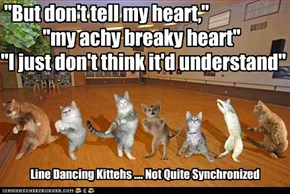 Line Dancing Kittehs .... Not Quite Synchronized