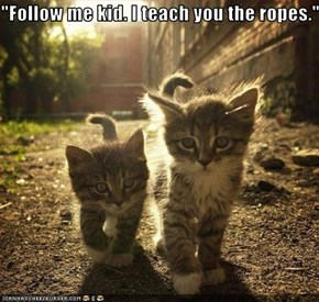 """Follow me kid. I teach you the ropes."""