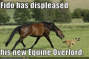 Fido has displeased  his new Equine Overlord.