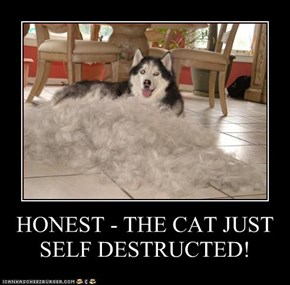 HONEST - THE CAT JUST SELF DESTRUCTED!