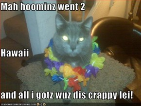 Mah hoominz went 2 Hawaii and all i gotz wuz dis crappy lei!