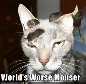 World's Worse Mouser