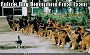Police Dog Discipline Final Exam