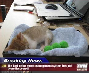 Breaking News - The best office stress management system has just been discovered!