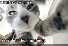 placin secret camera  to see who iz stealin mah noms.