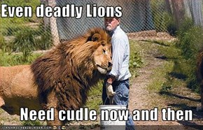 Even deadly Lions  Need cudle now and then