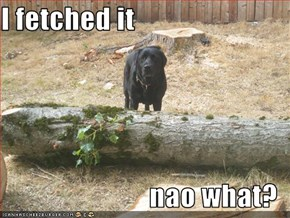 I fetched it  nao what?