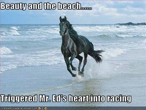 Beauty and the beach......  Triggered Mr. Ed's heart into racing