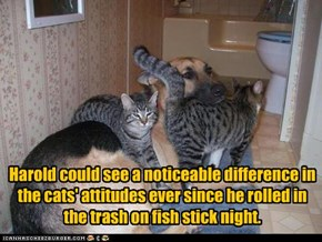 Harold could see a noticeable difference in the cats' attitudes ever since he rolled in the trash on fish stick night.