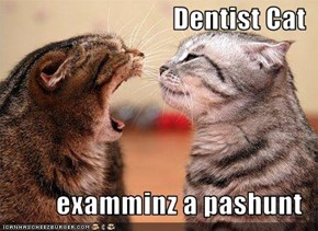 Dentist Cat  examminz a pashunt