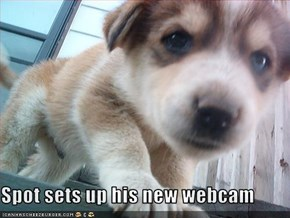 Spot sets up his new webcam
