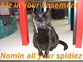 I iz in your basement  Nomin all your spidiez
