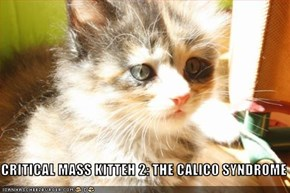 CRITICAL MASS KITTEH 2: THE CALICO SYNDROME
