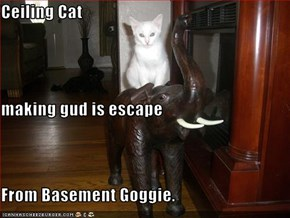 Ceiling Cat  making gud is escape  From Basement Goggie.