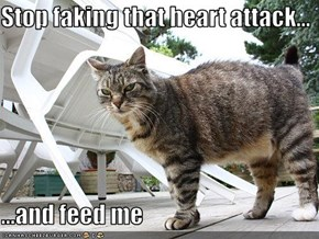 Stop faking that heart attack...  ...and feed me