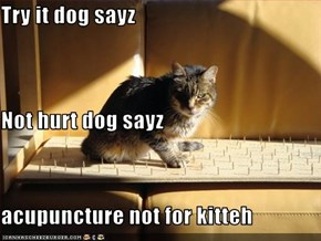 Try it dog sayz Not hurt dog sayz acupuncture not for kitteh