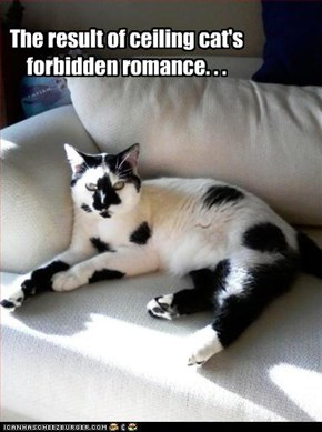 The result of ceiling cat's forbidden romance. . .