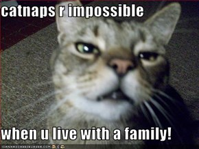 catnaps r impossible  when u live with a family!