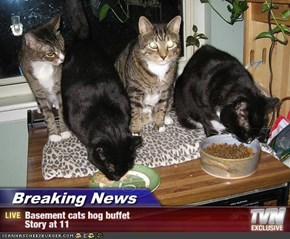 Breaking News - Basement cats hog buffet     Story at 11