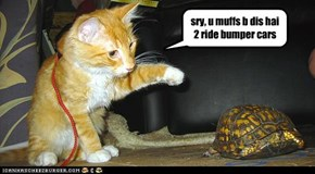 sry, u muffs b dis hai 2 ride bumper cars