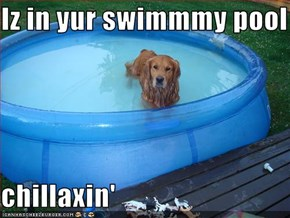 Iz in yur swimmmy pool  chillaxin'