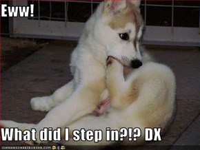 Eww!  What did I step in?!? DX