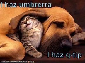 I haz umbrerra   I haz q-tip
