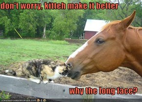 don't worry, kitteh make it better  why the long face?
