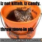iz not kitteh. iz candy.  throw more in plz.