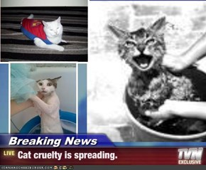 Breaking News - Cat cruelty is spreading.