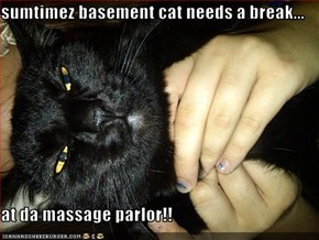 sumtimez basement cat needs a break...  at da massage parlor!!