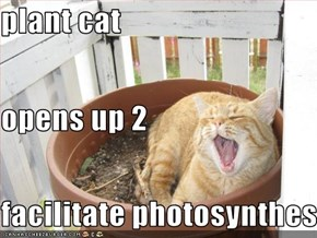 plant cat opens up 2 facilitate photosynthesis