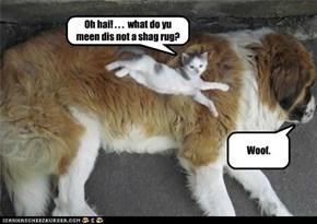 Oh hai! . . .  what do yu meen dis not a shag rug?
