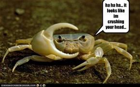 ha ha ha... it looks like im crushing your head...