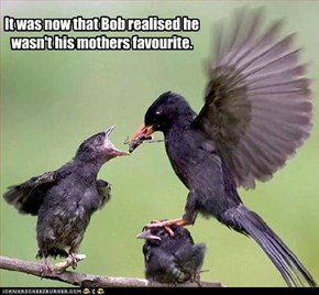 It was now that Bob realised he wasn't his mothers favourite.