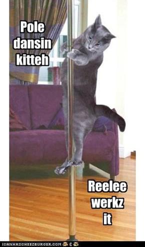 Pole dansin kitteh