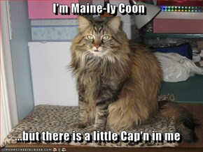 I'm Maine-ly Coon  ...but there is a little Cap'n in me