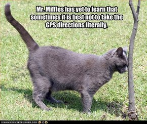 Mr. Miffles has yet to learn that sometimes it is best not to take the GPS directions literally.