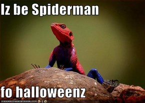 Iz be Spiderman  fo halloweenz