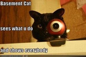 Basement Cat sees what u do and shows everybody