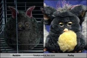 Nubbin Totally Looks Like Furby