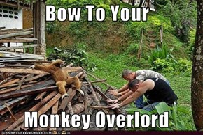 Bow To Your   Monkey Overlord