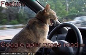 Fastur!!!  Goggie goin' 'cross road!!!!!!