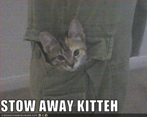 STOW AWAY KITTEH