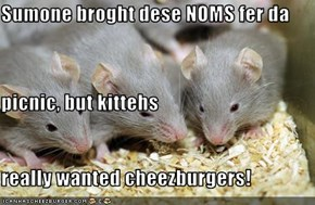 Sumone broght dese NOMS fer da  picnic, but kittehs  really wanted cheezburgers!