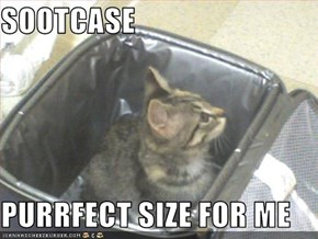 SOOTCASE  PURRFECT SIZE FOR ME
